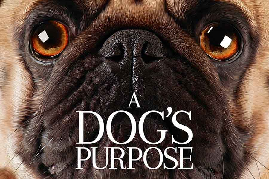 A Dog S Purpose Poster